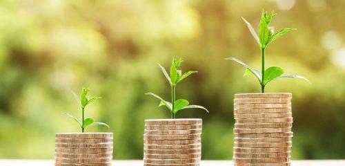 rośliny wyrastające ze stosów monet